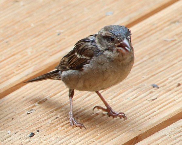 G-Vögelchen-B600.jpg